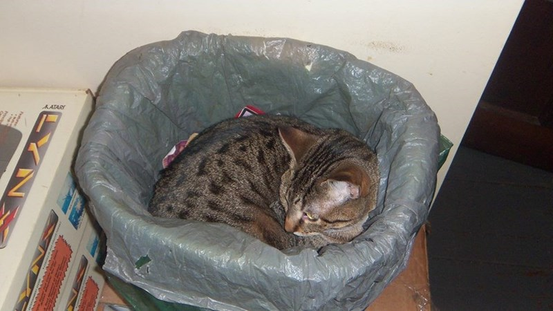 Cat snuggling up in the garbage can