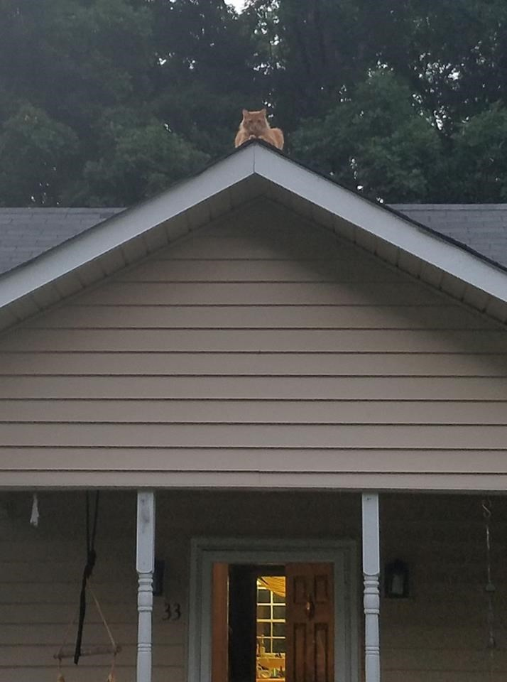 Cat standing right at the apex of the roof, like he is the guardian of the house.