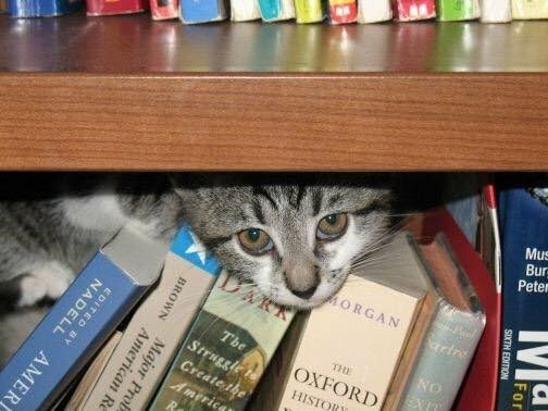 Cat hiding among a whole bunch of books