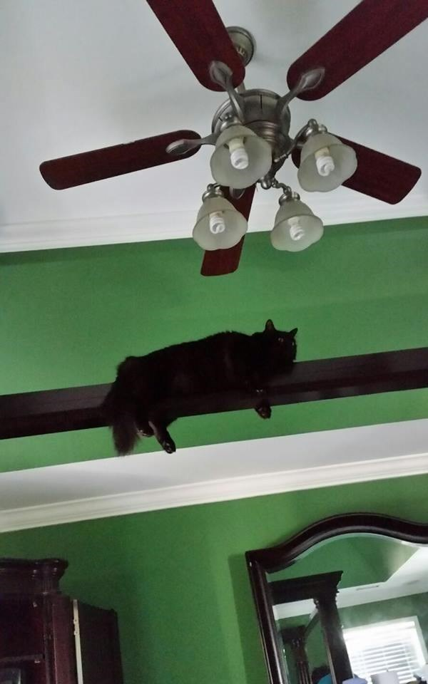 Cat moving in close to examine the fan