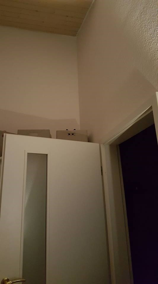 Cat watching your from the boxes behind that door.