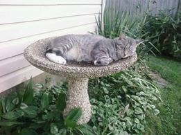 Cat napping in the birdbath, taking it all up to himself.
