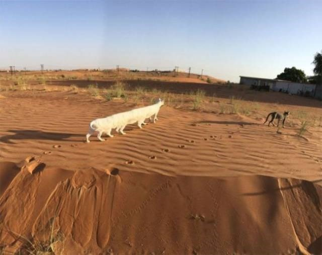 Cat looks like he has 8 legs because of how panorama camera mode works.