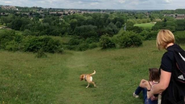 Panorama with dog in picture