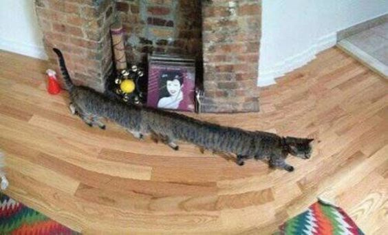 Cat stretched all the way across the floor in panoramic pic
