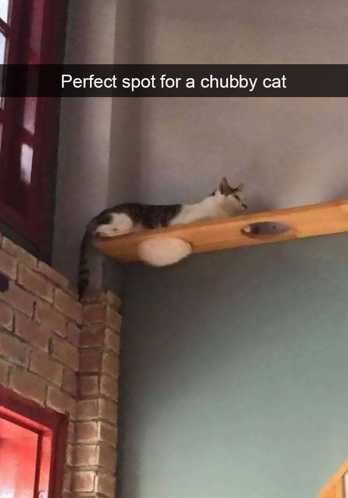 Chubby cat perched up high on a plank with holes in it and his hair is popping out with true fluffiness.