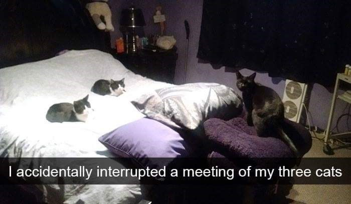 Snap chat of a cat meeting that was interrupted.