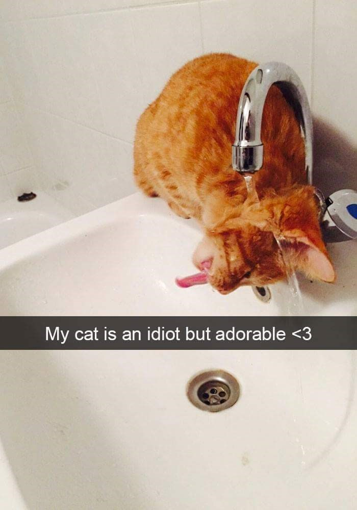 Cat trying to drink straight from a faucet and failing horrible at it.