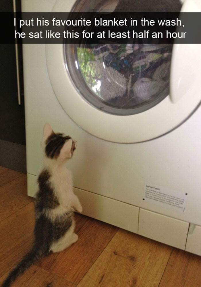 cat staring at the washing machine for half an hour after his favorite blanket was put in the wash.