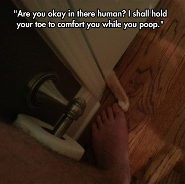 Cat holding your toe in comfort so that you can poop.