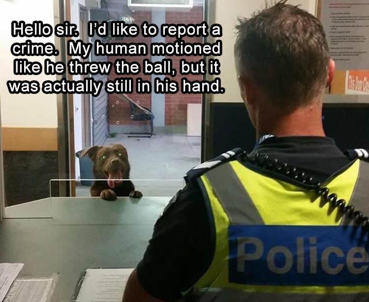 Meme of a dog at a police station complaining that his human acted as if throwing the ball but then didn't throw anything instead.
