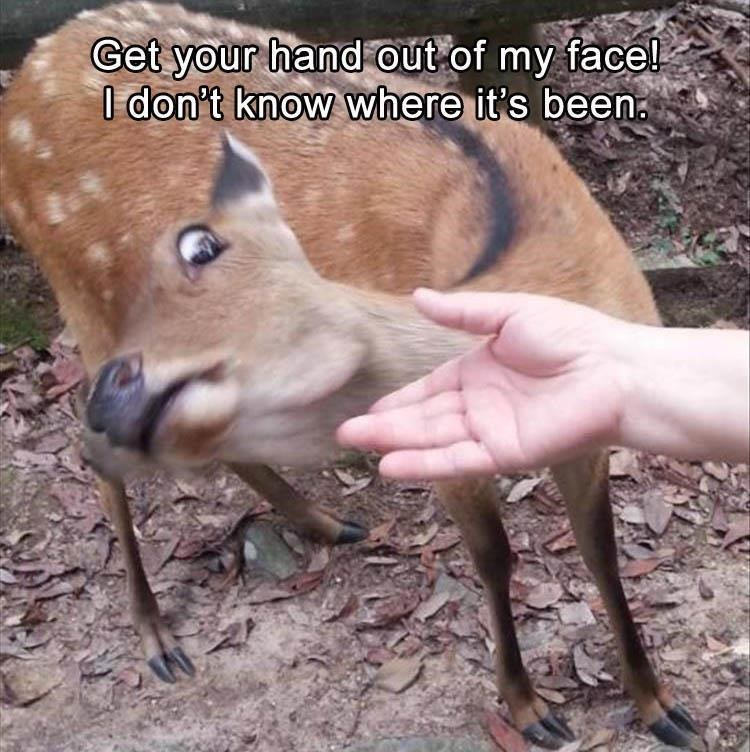 Deer giving the side-eye and keeping away from the human's hand trying to pet it.
