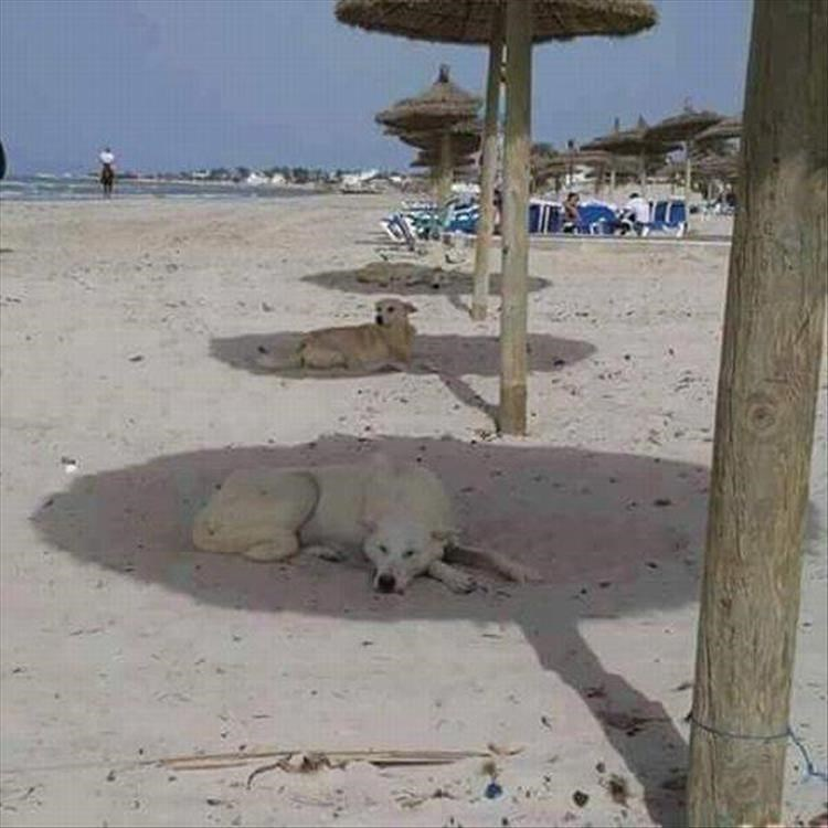 Dogs cooling off in the shaded area on the beach.