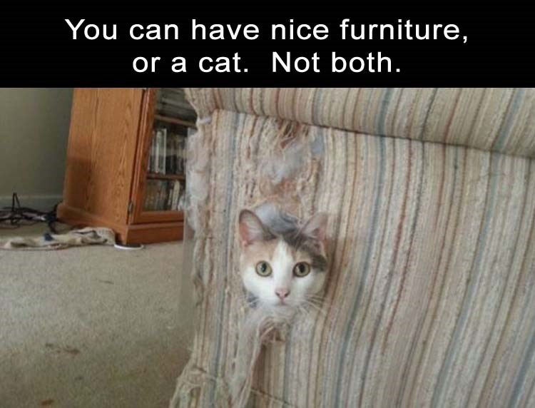 Meme about how you can have nice furniture, or a cat, but not both.