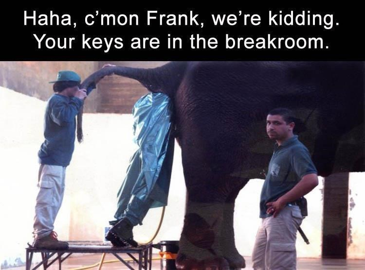 man with his whole torso up the backend of an elephant with joke that his keys aren't even there, they are in the breakroom