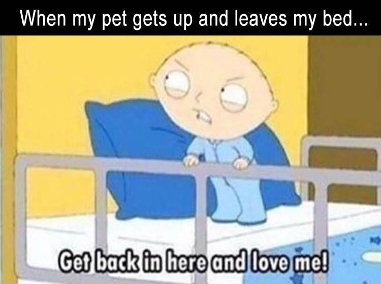 Stewie meme of Get Back In Here And Love Me about the feeling when pet gets up and leaves the bed.