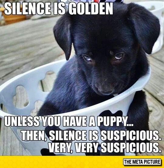 a cute picture of a black puppy