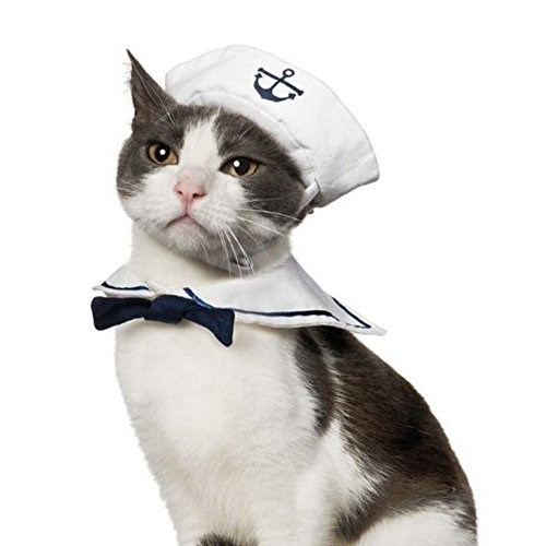 Cat dressed up as a sailor with hat and collar.