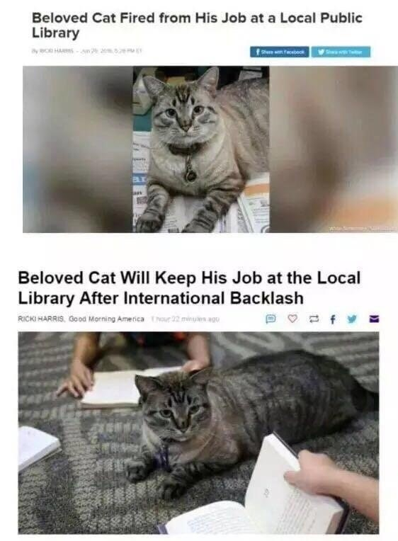 Funny headline about cat being fired and then rehired at library after the internet protested the firing.