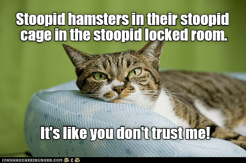 Its Like You Dont Trust Me Lolcats Lol Cat Memes Funny