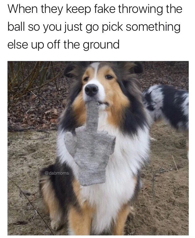 Vertebrate - When they keep fake throwing the ball so you just go pick something else up off the ground @dabmoms
