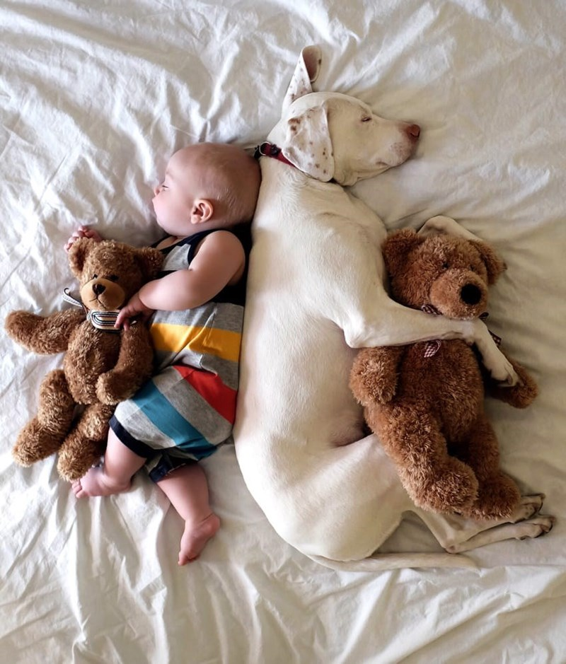 Nora and Archie cuddling up to some teddy bears