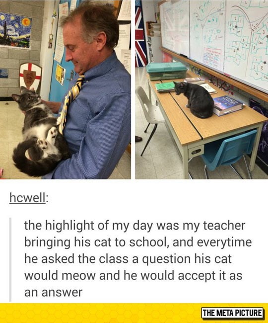 a picture that shows a teacher holding his cat and that every time he asked his students a question the cat would answer with a meow and he would just accept it as the answer