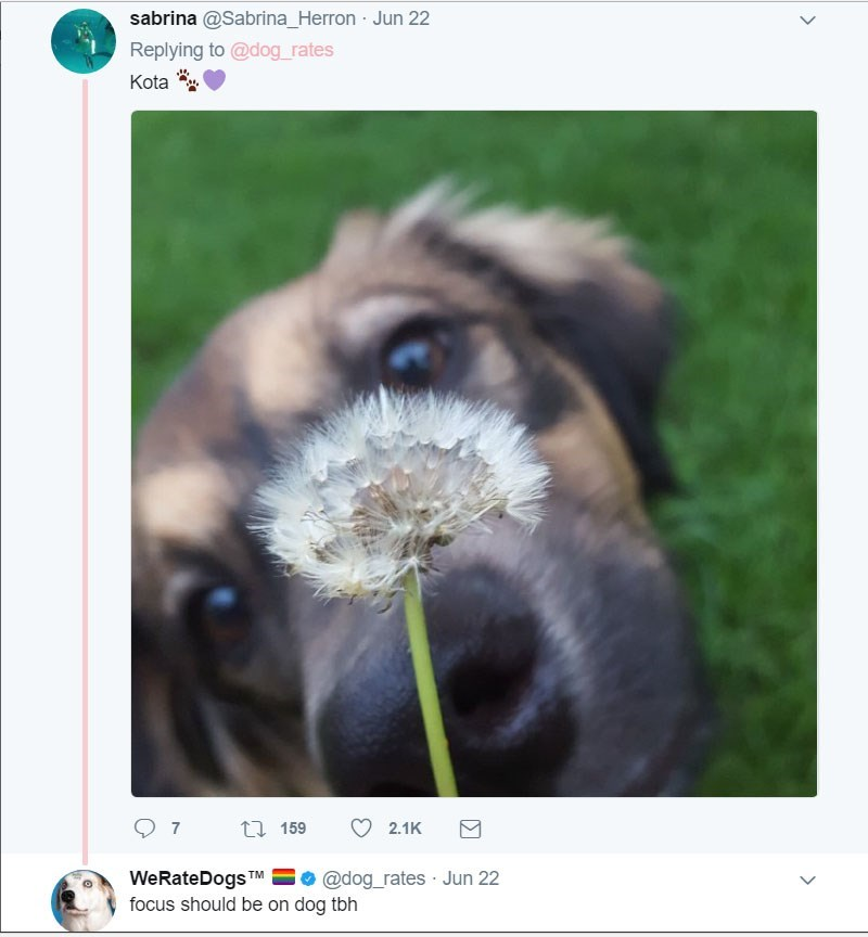 dog having a moment with the dandelion