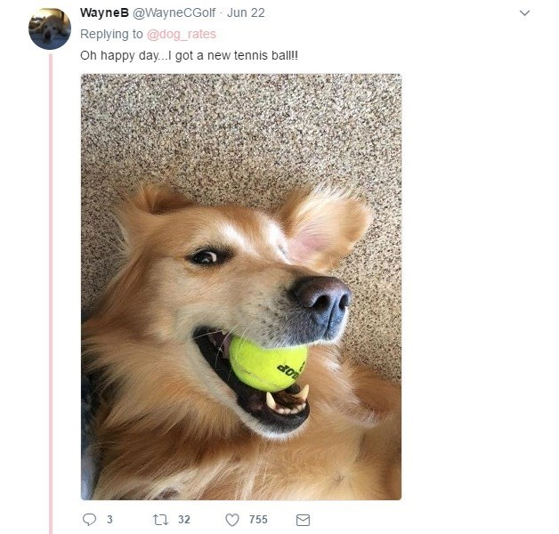 Dog selfie with favorite tennis ball in the mouth
