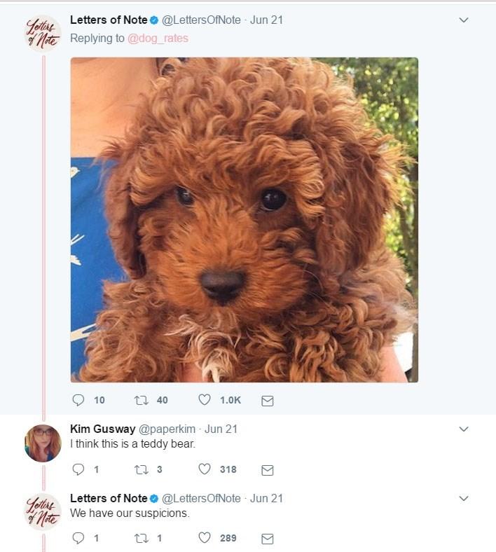 Very cute dog selfie