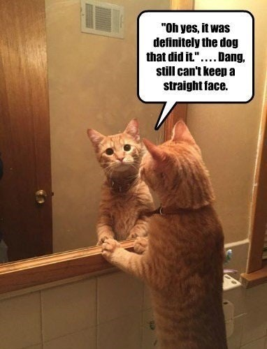 a cat looking in the mirror trying to lie seeing as that is what he will do and blame everything on the dog but can't keep a straight face