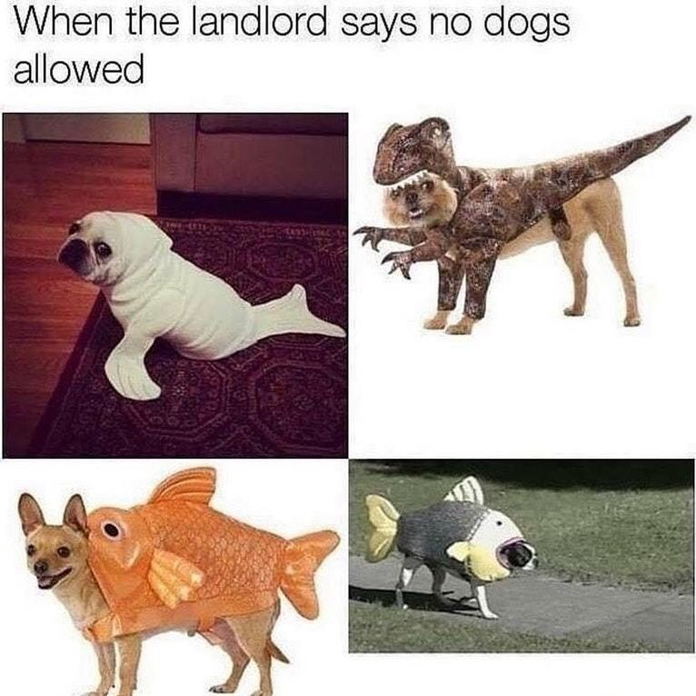 Funny meme about when your landlord says no dogs allowed, four photos of dogs in costumes to look like other animals.