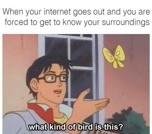 Funny meme about when your internet breaks and you have to spend time in the world around you, anime screenshot of a man looking at a butterfly and asking what kind of bird it is.
