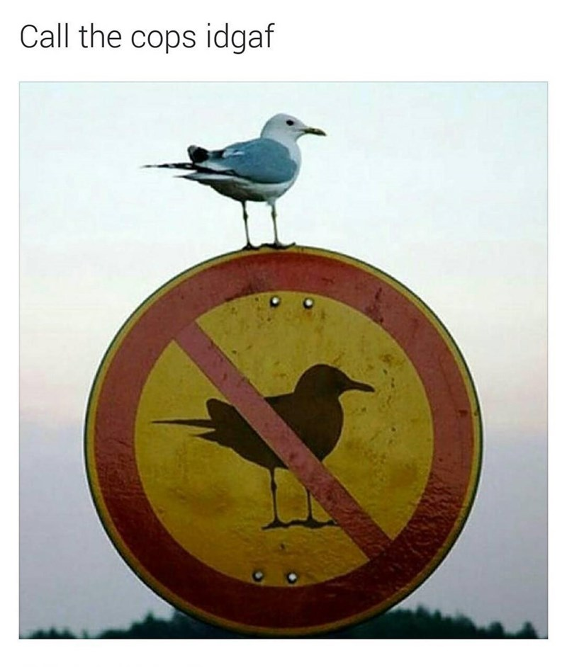 Funny meme of a seagull on top of a sign that says no seagulls, text reads: call the cops IDGAF (i don't give a fuck).