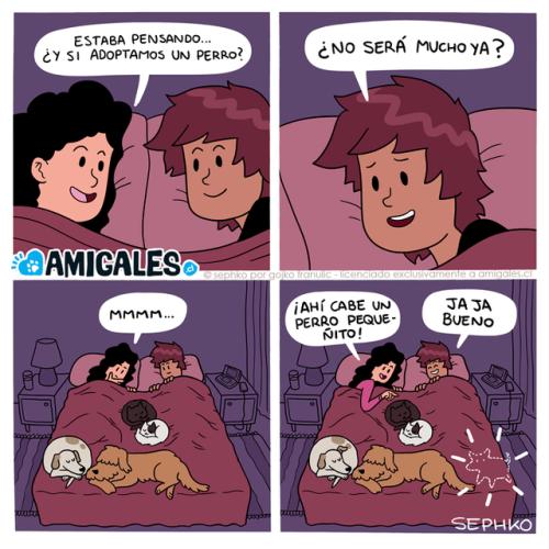 cuando en tu cama hay espacio para una mascota mas