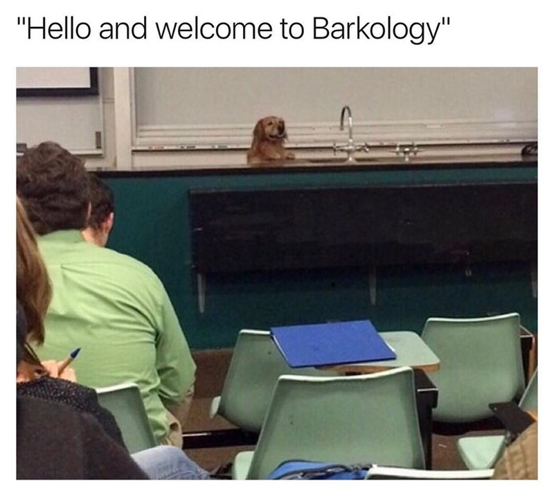 "Funny meme that makes a dog look like the professor of a classroom, text says ""welcome to barkology."""