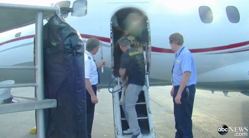 Andrew Morales' dogs being loaded on an airplane provided by Helen Roseburg
