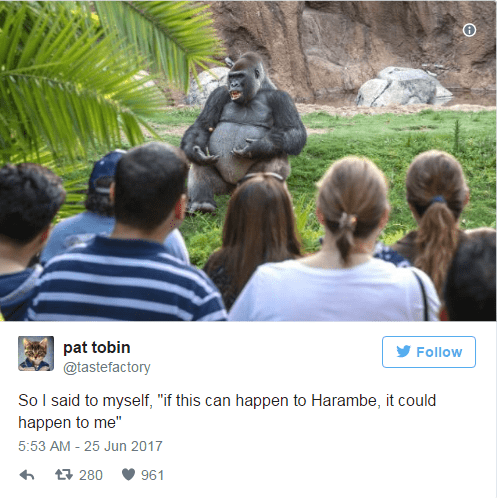Pat Tobin Tweets a Harambe tale being told by the TED Talk Gorilla