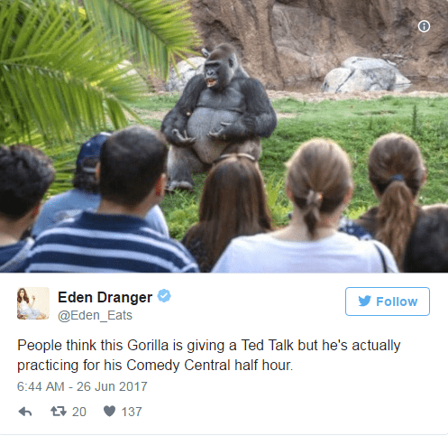 Eden Dranger clarifies that TED Talk gorilla is just practicing his Comedy Central half hour.