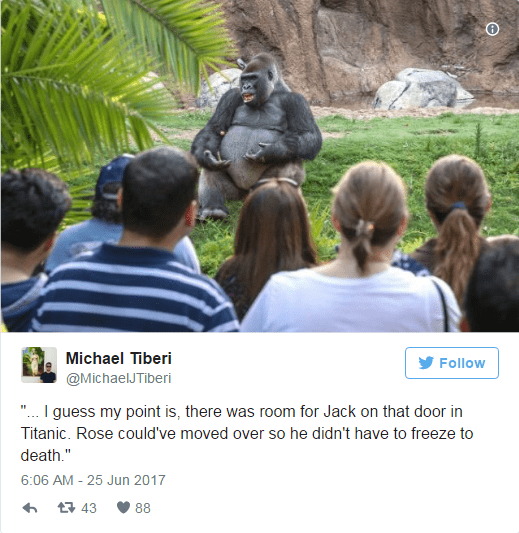 Michael Tiberi tweets a meme of the TED Talk gorilla lecture as a parable on how Jack AND rose would have both fit onto the door in the movie Titanic