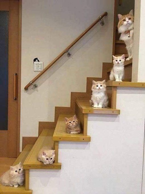 Picture of cat and 5 little kittens on the stairs.