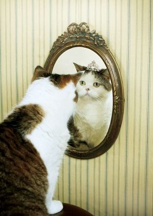 Cat looking in the mirror and seeing a princess cat in the reflection.
