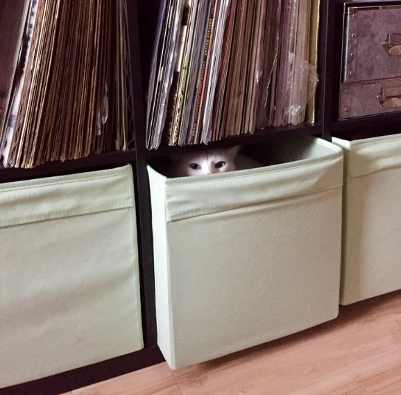 Cat hiding in a canvas box.