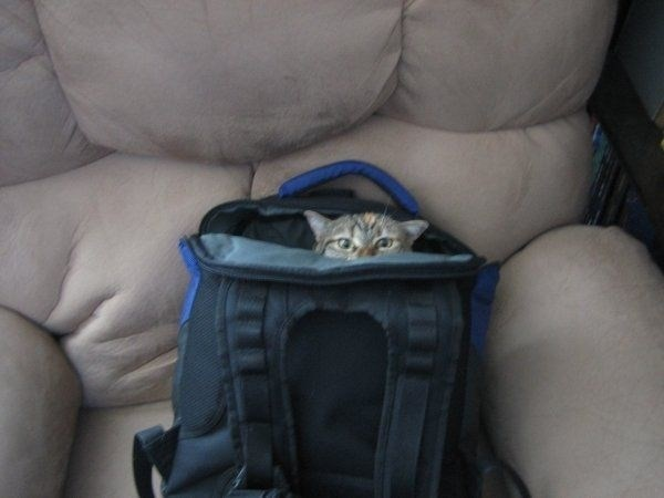 Cat in a back pack