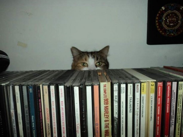 cat hiding behind all the CDs