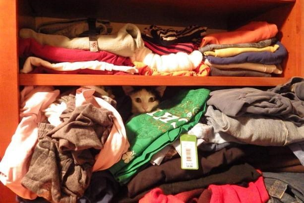 Cat hiding in the closet behind a bunch of shirts