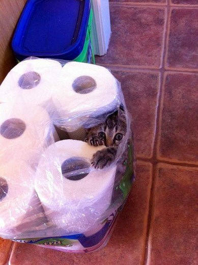 Cat stuck in rolls of paper towels