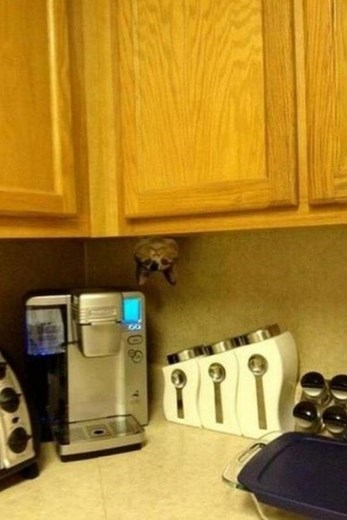 Cat hiding in the kitchen cupboards staring at you upsidedown.