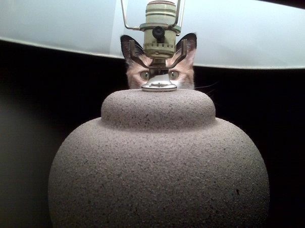 cool pic of a cat hiding behind a lamp