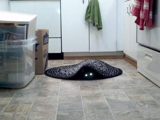 Cat with glowing eyes hiding under a rug